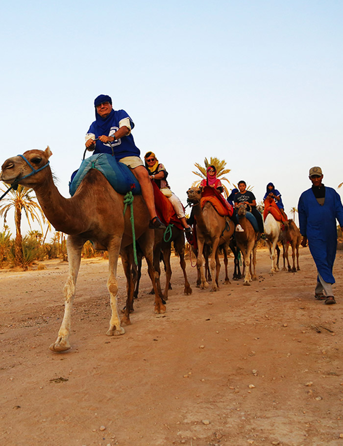 Camel-ride-in-marrakech-in-palmery-gorve